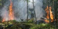 Greenpeace: i cambiamenti climatici aggravano il fenomeno degli incendi in Italia