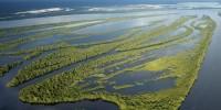 """WWF: l'Amazzonia è a rischio """"estinzione"""""""