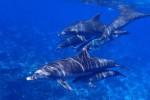 Greenpeace: nel Santuario dei Cetacei balene e delfini minacciati da plastica, pesca e traffico marittimo