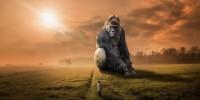 Wwf: dal 1970 ad oggi persi due terzi degli animali selvatici del pianeta