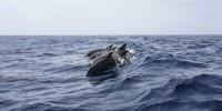 Sardegna: al via progetto per la protezione dei cetacei nel Canyon di Caprera