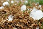 Coldiretti: inizia l'autunno con la grandine sui raccolti