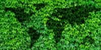 """Costa: """"Impegno italiano su azioni urgenti per la salvaguardia della Biodiversità entro il 2030"""""""