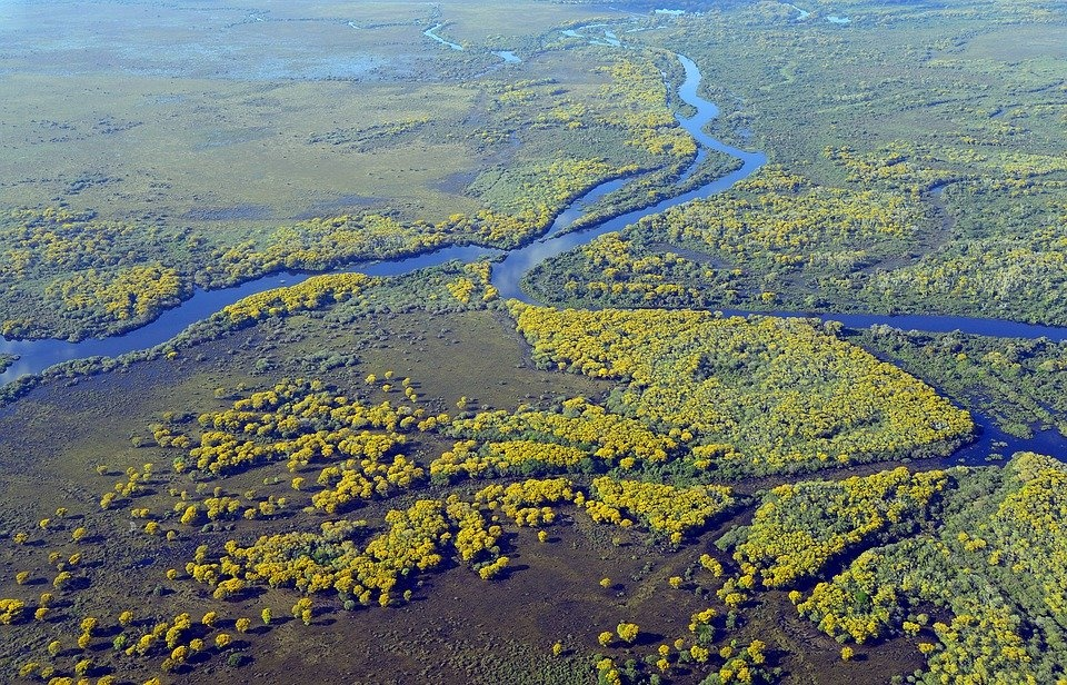 Greenpeace: Amazzonia, UE complice della deforestazione