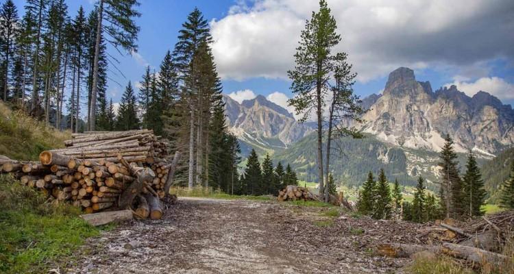 A due anni dalla tempesta Vaia, Ikea riqualifica un'area boschiva in Alto Adige
