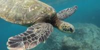 E.ON promuove ricerca su fauna marina e lotta all'inquinamento da plastica nelle Eolie
