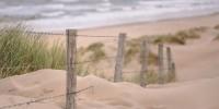Barriere naturali contro le mareggiate a difesa delle dune costiere