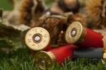 WWF: milioni di uccelli morti ogni anno per avvelenamento da piombo
