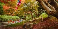 Ai Giardini di Castel Trauttmansdorff in scena i colori dell'autunno