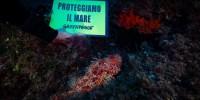 """Greenpeace: la rete """"Mare caldo"""" si espande a 4 nuove aree"""