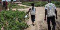 Agroecologia in Africa: un orto-giardino per liberare le popolazioni dalla fame