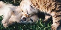 Studio: l'alterazione delle stagioni può avere importanti implicazioni su cani e gatti