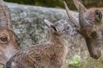 Parco Nazionale Gran Paradiso: al via le escursioni d'autunno