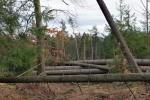 Vaia, due anni dopo: la Val di Fiemme  punta sulla valorizzazione dei servizi forestali naturali
