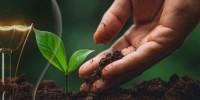 Selectra: per compensare consumi annuali di luce e gas di una famiglia servirebbero almeno 160 alberi