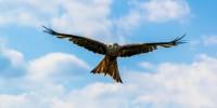 """Istituire l'Aquila Day, il giorno dedicato alla """"Bonelli"""""""