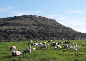 Dalla Sardegna tre formaggi di pecora diventano Presìdi Slow Food