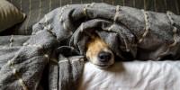 Botti di Capodanno pericolo per animali domestici: ecco 5 consigli anti-stress