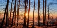 Greenpeace: le foreste dell'UE con gestione diversa potrebbero assorbire doppio anidride carbonica