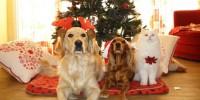 Natale e cani: il 63% degli italiani comprerà regalo per fido