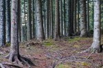 Progetto MADAMES-AX: un bosco gestito in maniera sostenibile migliora l'assorbimento di carbonio
