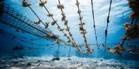 Adottare un corallo per Natale grazie a North Sails per aiutare la salvaguardia degli oceani