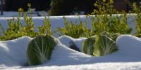Maltempo: allarme neve e gelo per gli ortaggi