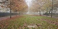 Milano: oltre 27mila metri quadrati di aree depavimentate negli ultimi mesi