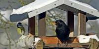 Lipu: ecco come aiutare gli uccelli in inverno
