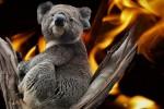 Incendi in Australia un anno dopo: 49 specie hanno perso 80% del loro habitat