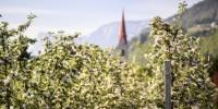 Lana: ad aprile un mese di festa dedicato ai fiori e alle erba selvatiche