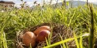 Pasqua in un maso Gallo Rosso: le antiche tradizioni contadine all'inizio della primavera