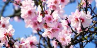 Caldo anomalo: piante in fiore fuori stagione e natura in tilt
