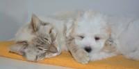 Coldiretti: 3,5 mln di cani e gatti in casa, tratta illegale vale 300 mln