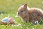 Pasqua: il Covid ferma un italiano su 3