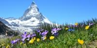 Il ritiro dei ghiacciai mette a rischio le piante alpine