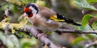 Bracconaggio: portato alla luce traffico illegale tra Italia e Malta, oltre mille uccelli protetti