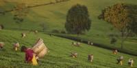 Lipton: arrivano le bustine di tè sostenibili: imballaggio riciclabile e filtro in carta e cotone