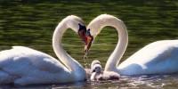 San Valentino, WWF: sempre più difficile l'amore tra animali, spesso per colpa dell'uomo