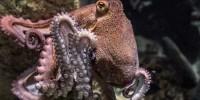 WWF: 30% di tutela per rigenerare la biodiversità del Mediterraneo