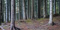 Rapporto PEFC: aumentano foreste gestite in modo sostenibile in Italia