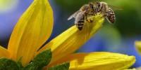 WWF: riparte nelle Marche il progetto bee safe