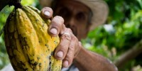 WWF: l'uovo di Pasqua, un pericolo per l'ambiente