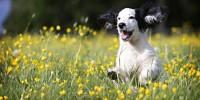 Ecco i pericoli per i cani in primavera e a Pasqua