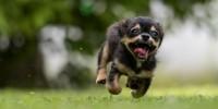 Cani: attenzione alla Leishmaniosi, ecco come proteggere il nostro amico a quattro zampe
