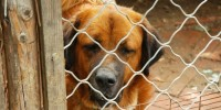 Randagismo: il 67% dei cani nei canili italiani si trova nel Sud Italia