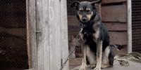 Cani in catena: presentato il 1° rapporto realizzato da Green Impact e Save the Dogs