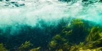Piante marine: essenziali per gli ecosistemi, ora sono a rischio