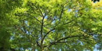 Roma partecipa al bando del Decreto Clima con tre progetti di boschi urbani