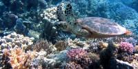Microplastiche: a rischio anche grandi predatori e Corallo rosso